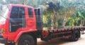 Isuzu Ftr Container Truck For Sale (1989)
